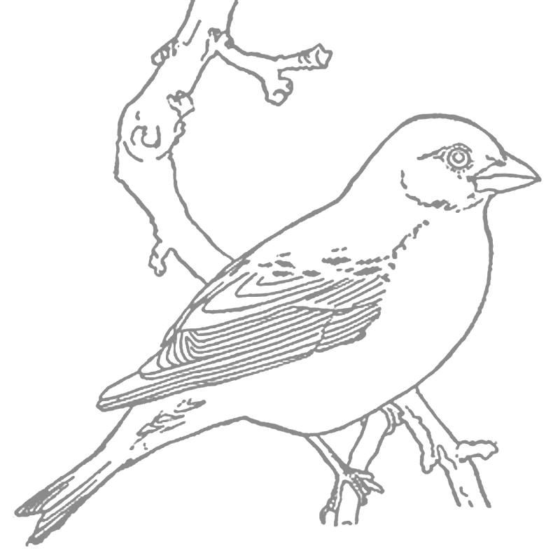 Robin Tracing Coloring Page