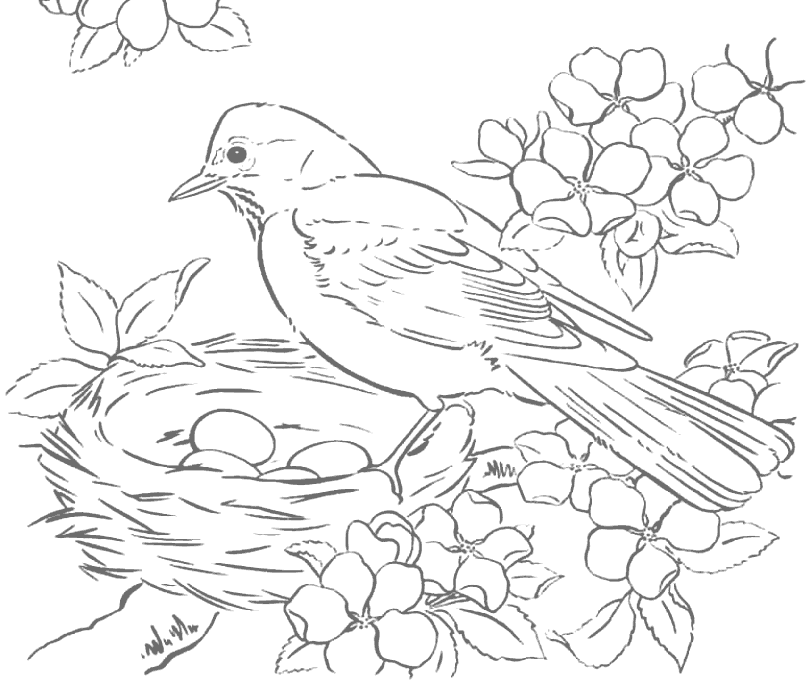 Robin And Eggs In Birds Nest Tracing Coloring Page