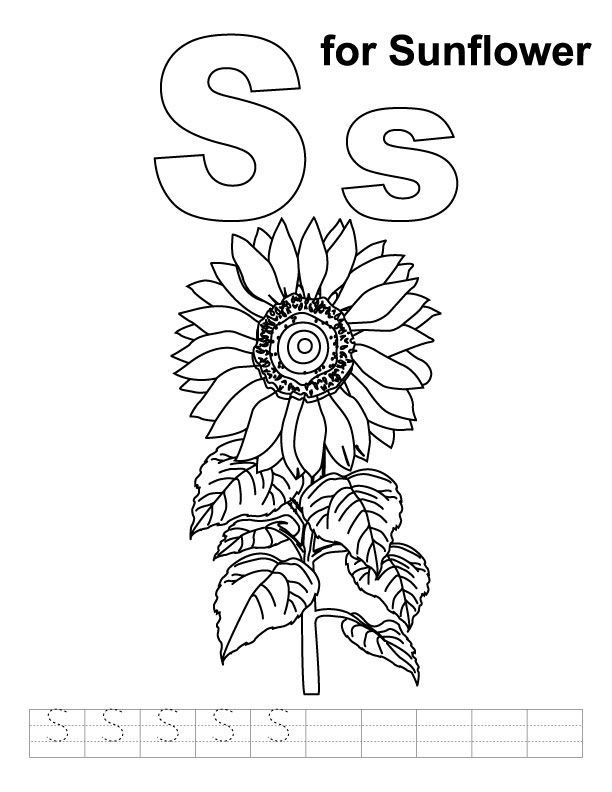 S for Sunflower Preschool Worksheet