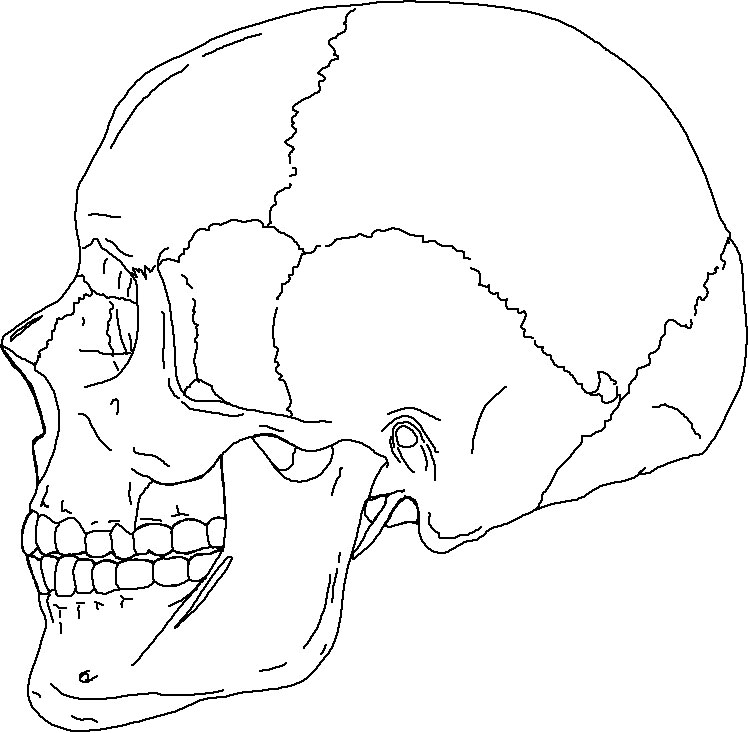 Skull Anatomy Coloring Pages – Coloring.rocks!