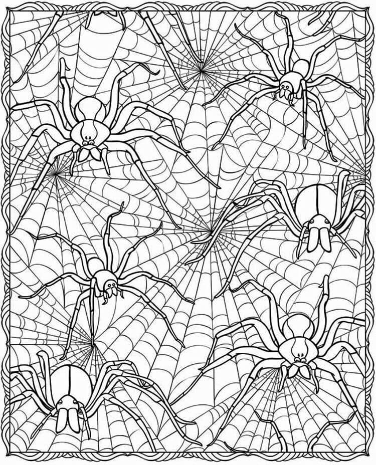Spiders in Web Coloring Page