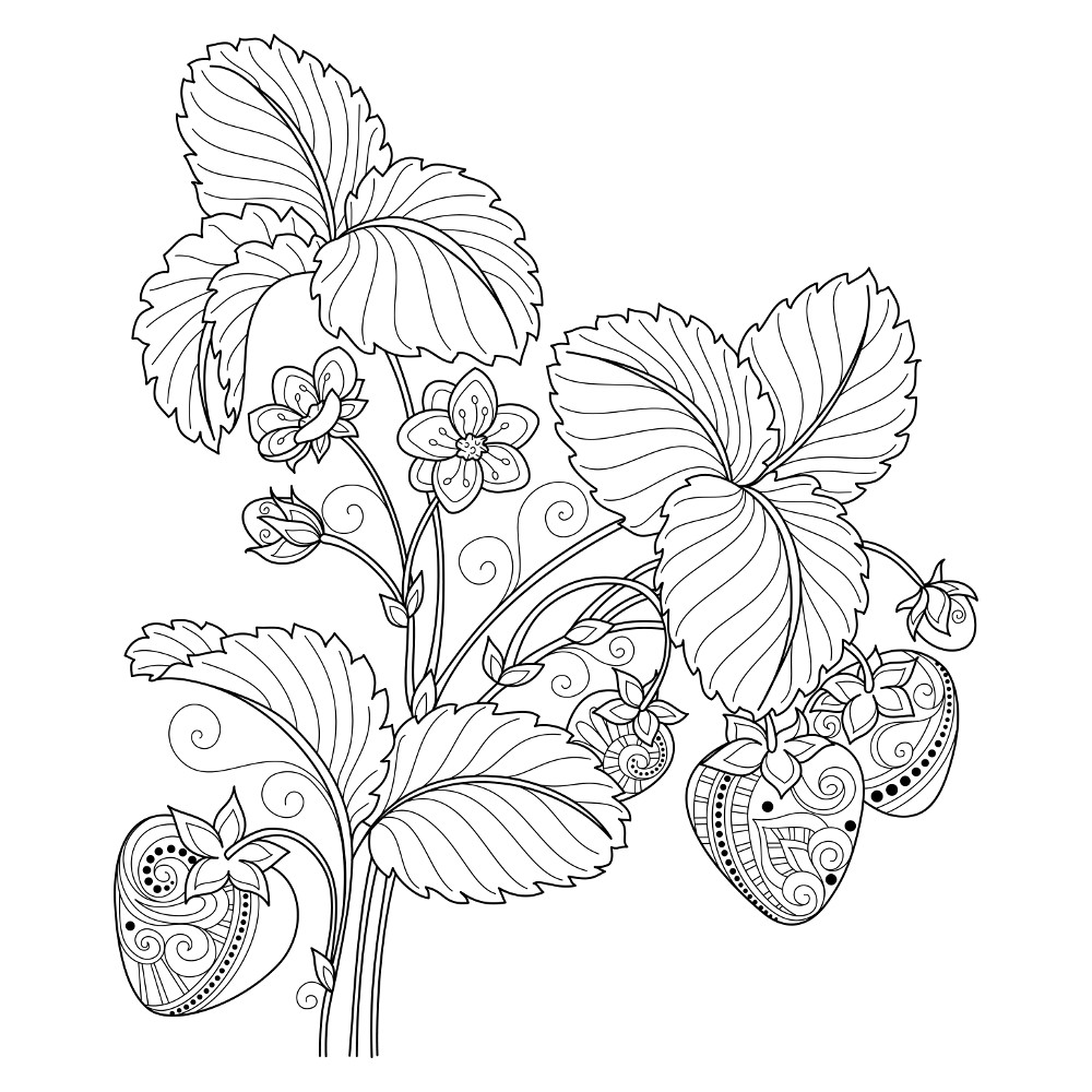 Strawberry Plant Patterns Coloring Page