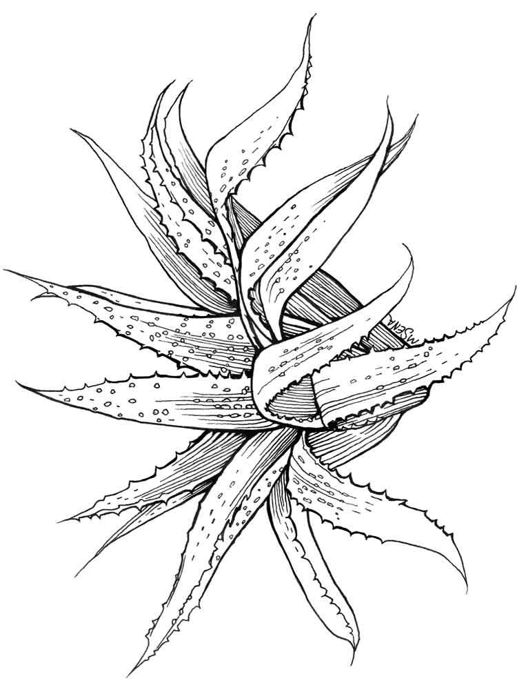 Succulent Aloe Vera Coloring Page