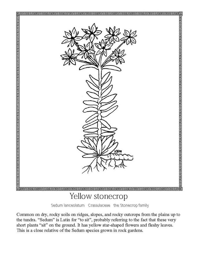 Succulent Plant Coloring Page