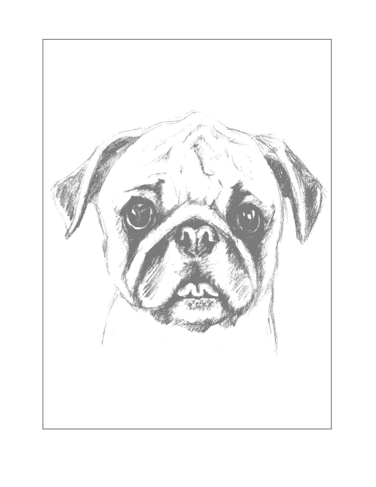 Traceable Pug Drawing Coloring Sheet