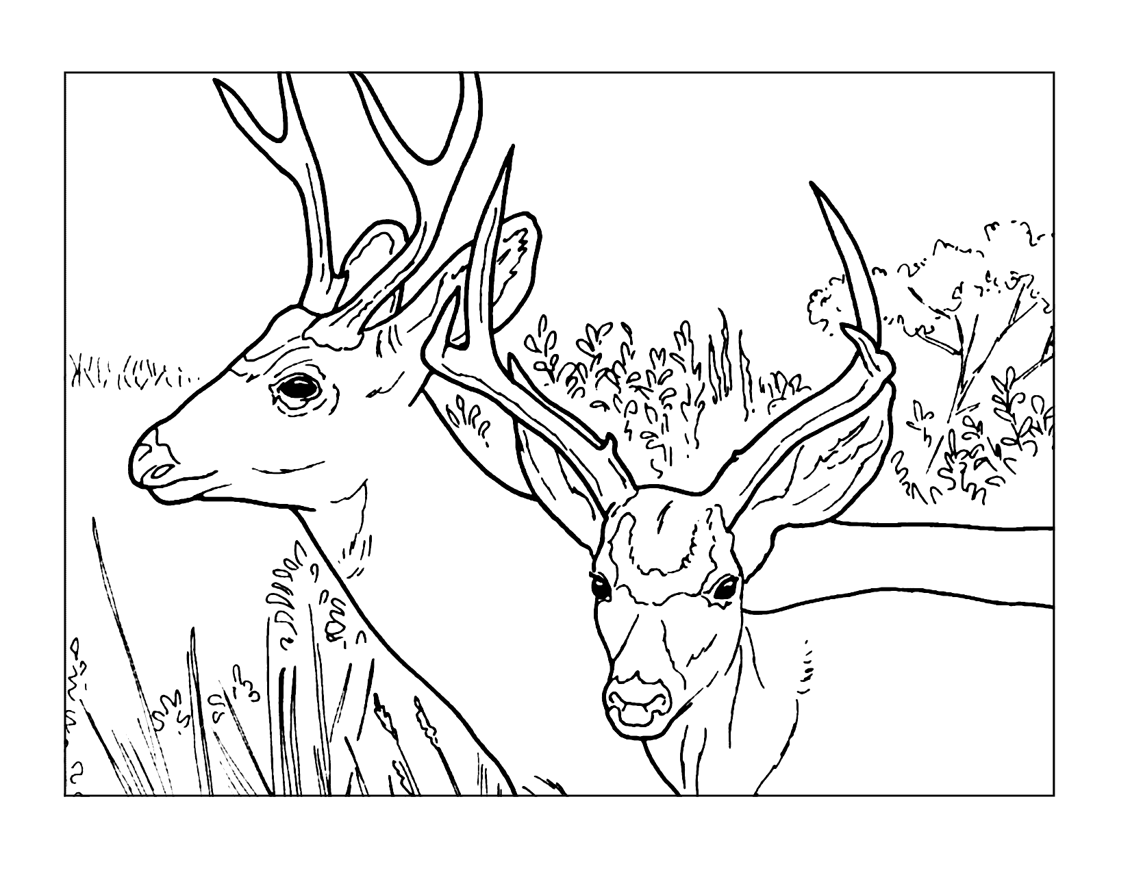Two Deer Coloring Page