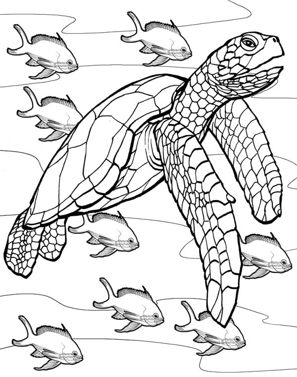 - Sea Turtle Coloring Pages – Coloring.rocks!