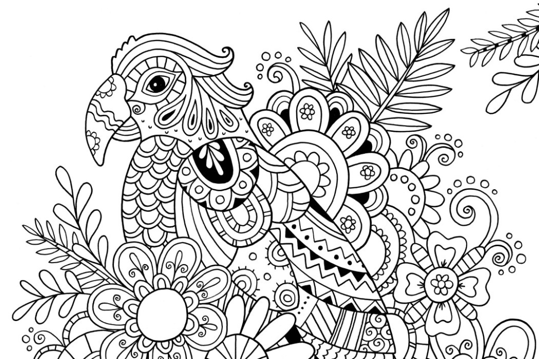 Parrot Coloring Pages Coloring Rocks